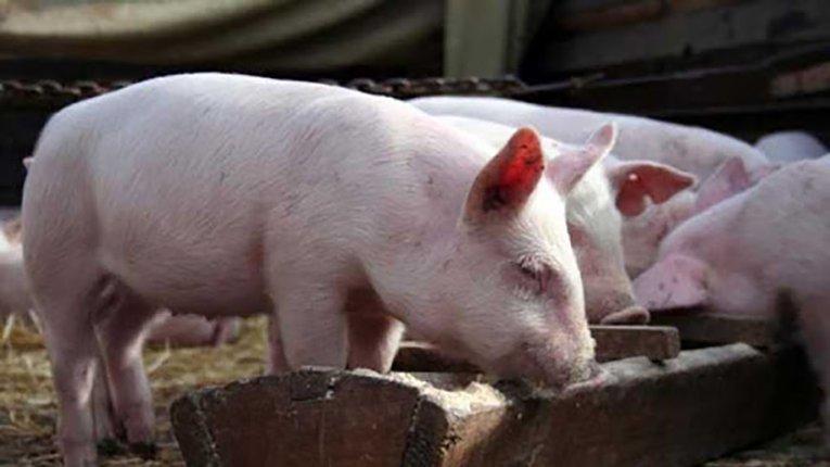 Харчові продукти, термін придатності яких сплив, можуть піти на корм тваринам