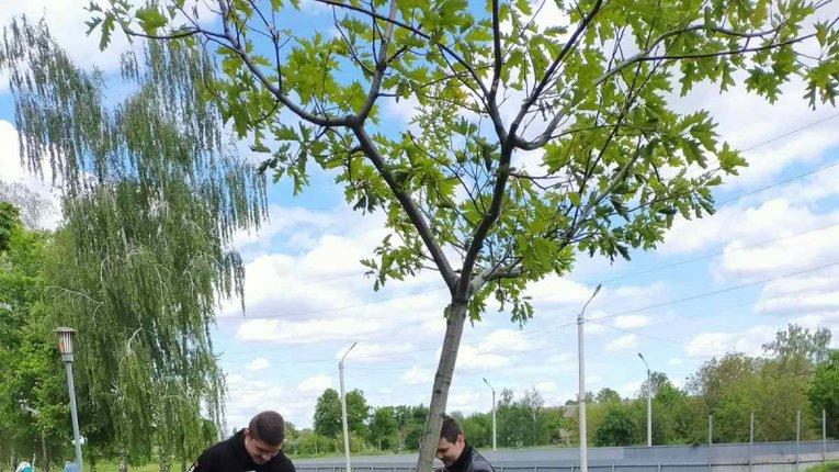 Школярі сприяють озелененню Лохвиці