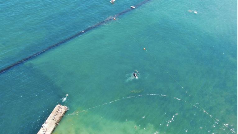 В Одесі проводять цілу спецоперацію рятуючи родину дельфінів з пастки