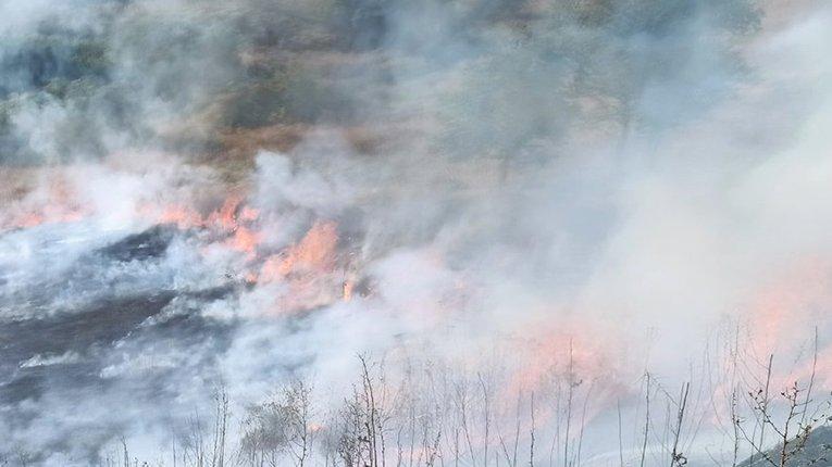 Лісові пожежі повернулися на Полтавщину