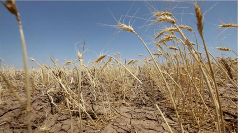 Вінниччина проситиме уряд визнати область зоною стихійного лиха через страшний неврожай