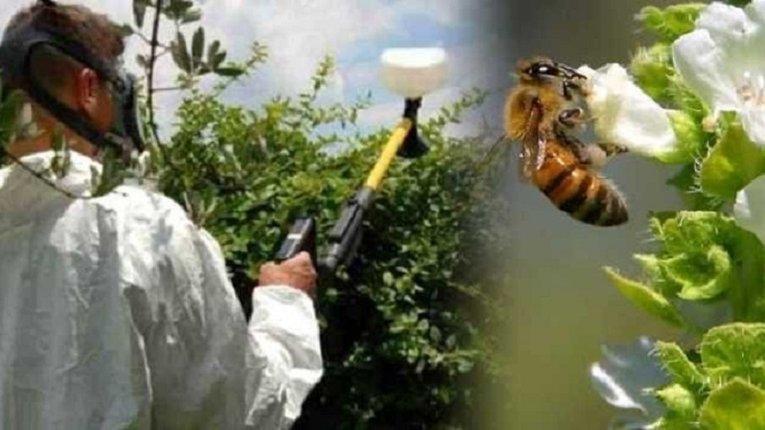 Безпека бджіл при застосуванні засобів захисту рослин на медоносних культурах
