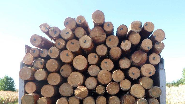 Всупереч забороні у Миргородському районі продовжують рубати ліси