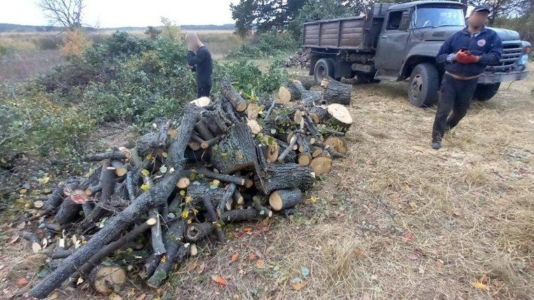 Незаконну вирубку виявлено у Полтавському районі