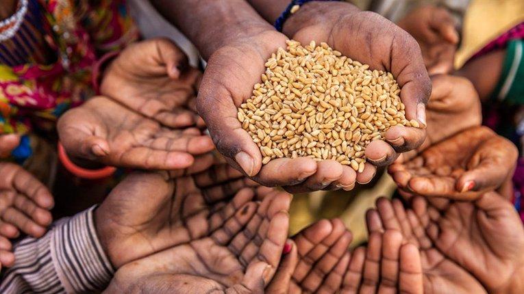 Цього року Нобелівську премію миру присуджено Всесвітній продовольчій програмі