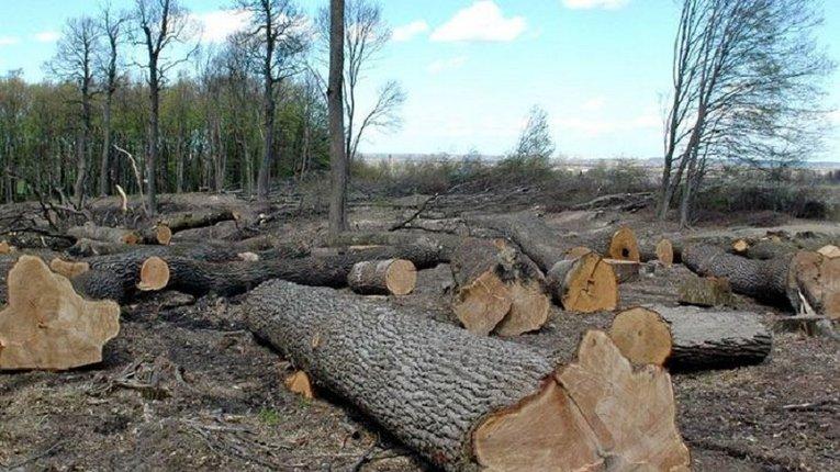 На Волині посадовців звинуватили в організації незаконної вирубки лісів