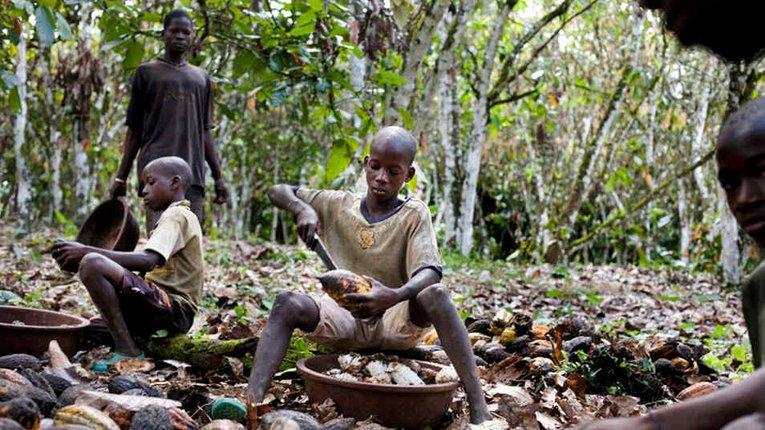 Висока ціна шоколаду — наслідок експлуатації дитячої праці