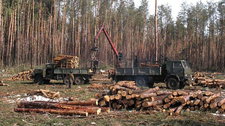 СБУ і ДБР затримали представників «лісової мафії» на Рівненщині