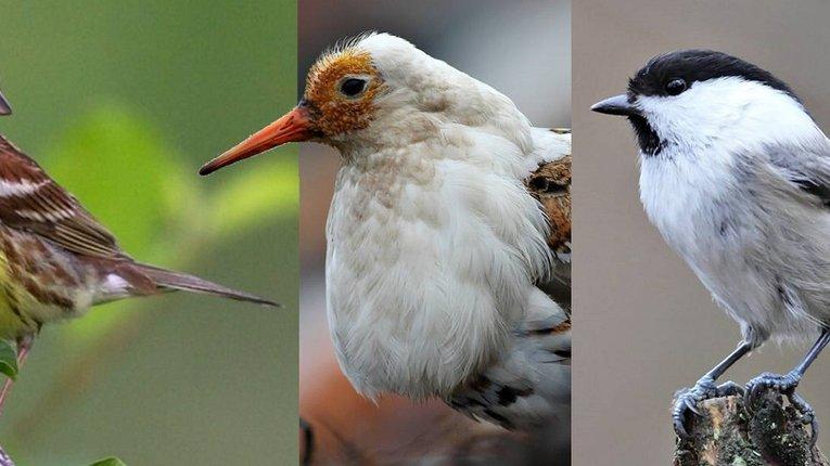 Людське втручання у природу прискорює зникнення рідкісних видів птахів, — орнітологи Фінляндії