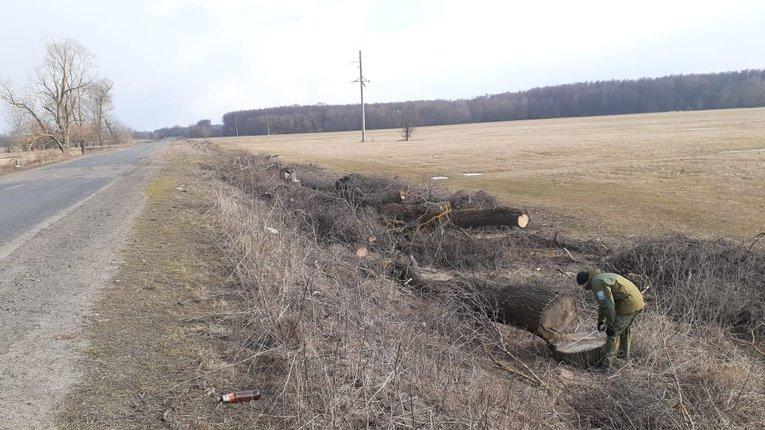 Біля Котельви вирубали дерев на 3 мільйони