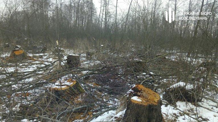 ДБР оголосило підозру екскерівникам Шацького нацпарку, які нарубали дерев на 16 мільйонів