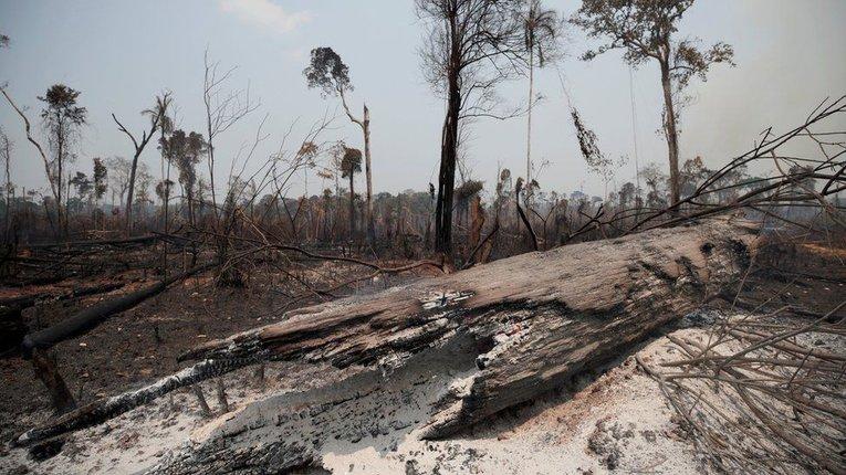 Амазонські ліси – місце двобою дереворубів і природоохоронців