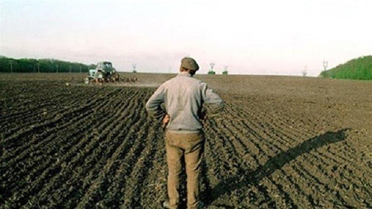 Держстат визнав сільське господарство найдохіднішою галуззю української економіки