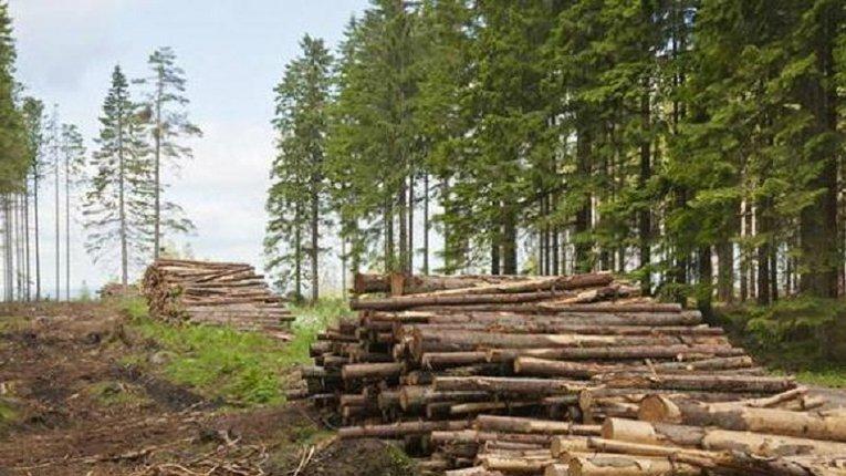 Лісова галузь України потребує реформування