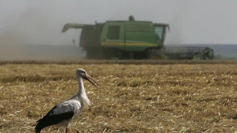 Обсяги виробництва української сільгосппродукції скоротилися,— Держстат