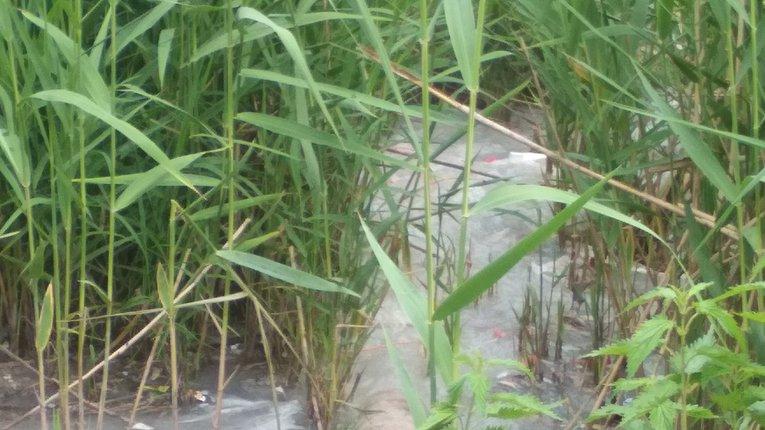 На Полтавщині молокозавод забруднює довкілля